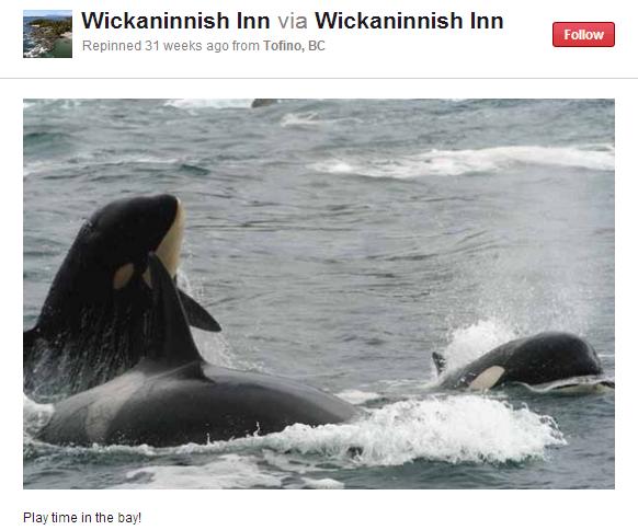 wickinn whales
